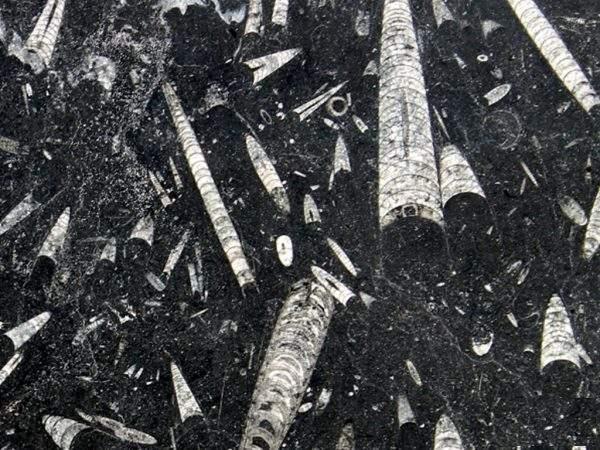 Marmura Fossil Black